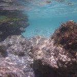 Elafonissi pod wodą