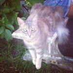 Le chat qui se balade dans le jardin est adorable!