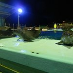 イルカのナイトショーの様子