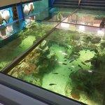 海洋館の「サンゴの海」水槽(この上を歩けます)