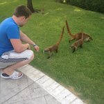 Cute little coatis <3