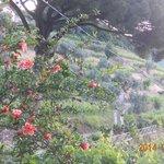 pomegranates in celebration at Melograno in Costa d'Amalfi