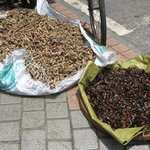 Drying cockroaches