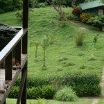 Blick von der Terrasse (mit Haustieren...)