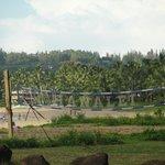 Hanalei Beach- Volleyball area