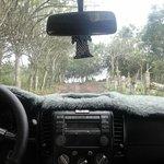 Tortuga en la carretera
