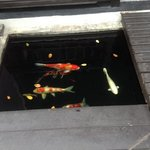 fish by ground floor rooms
