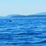 Watching the Orcas