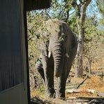 Elephant next to our room