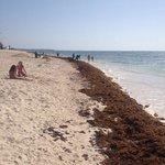 Spiaggia con alghe 2