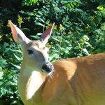Nearby Shenandoah National Park