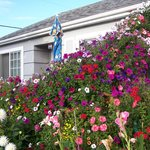 The unit where we stayed - flowers galore!