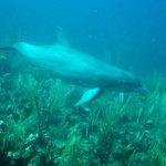 Porpoises - Ramon's Dive