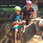 Donkey ride for the kids (4-11 yrs old)