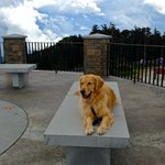 Mt. Mitchell Observation Deck - as you can see its a place to rest and take in the views!