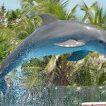 The wonderful dolphin experience