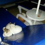 Yasmin kedileri
