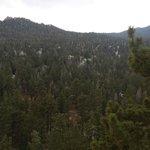 Pine everywhere