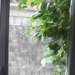 view from other window