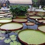 бассейны с водными лилиями
