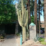 ENTRANCE TO THE HOTEL WITH A GIANT FANTASTIC CACTUS