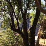 Дерево при супске/подъеме в монастырь