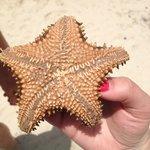 starfish we found when snorkeling