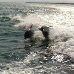 Dolphins at play with the Thundercat