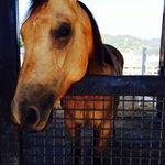 Horse at Tamber Bey
