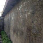 Mouldy unpainted walls