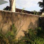 Mouldy garden walls