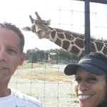 Photo bombed by a giraffe