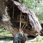 Tree house accommodation at Port Olry Aug 2014
