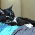 Austin, Craigs friendly cat