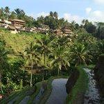 Tegalalang - looking towards main street