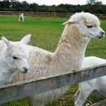 Barker Stakes Farm Foto