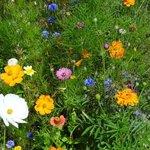 fleur naturelle