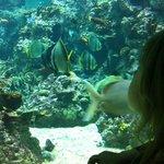 admirando los peces