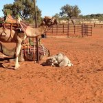 Johntie the 1 mth old camel