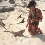 les iguanes