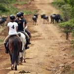 Horse riding in the game reserve