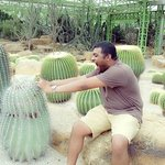 Cactus joing
