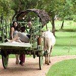 Cart Rides Around The Lake