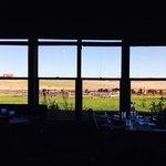 Blick aus dem Restaurant zur Büffelherde