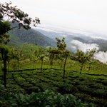 Tea Valley Resort - Veiw 2 (GhummakkadYaatri)