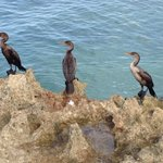 Cormorants on the beach