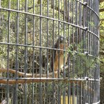 Bird enclosure