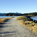 Our daily walks on Whiffen Spit Trail