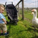 Meeting the ducks