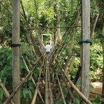 into the jungle..
